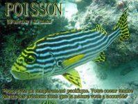 Horoscope du jour Poisson